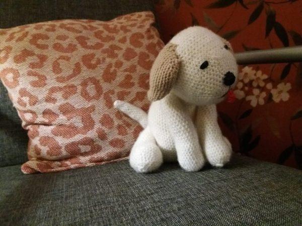 Labrador - wit - bruine oren